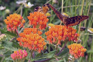 Our Top 10 Native Perennials