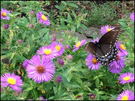 Plant Your Ohio Native Spring Garden this Fall