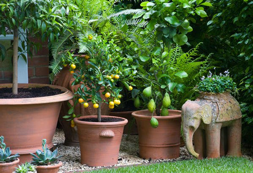Our Favorite Container Gardens