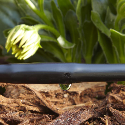 Save Time and Water with a Drip Irrigation System