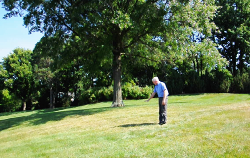 To Keep Trees Healthy in Summer, Try These Irrigation Changes