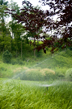 How to Choose the Best Lawn Sprinkler Contractor