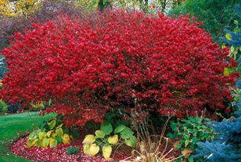 These 5 Shrubs are Great Options for TriState Gardens