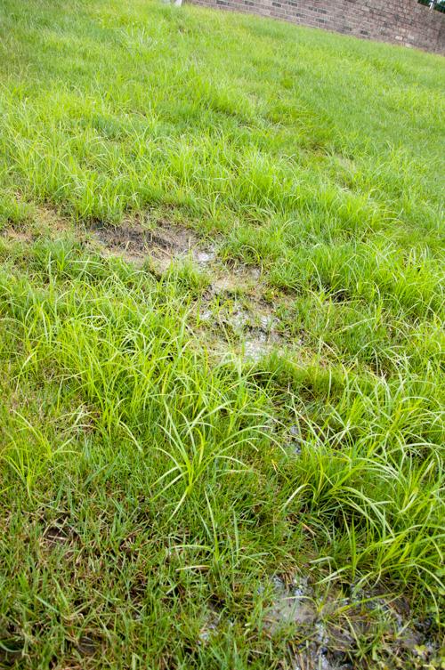 Sprinkler System Repair: 2 Kinds of Irrigation Leaks