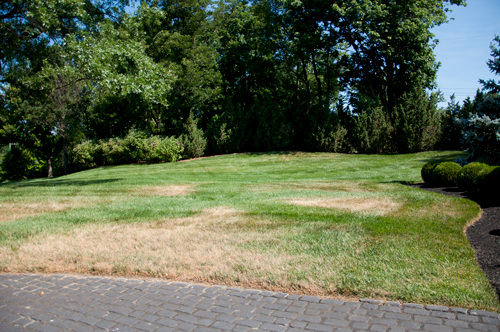 Stressed Lawns: Common Turf Problems You Might See this July