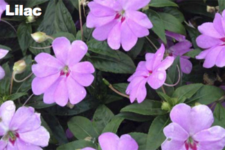 Our Favorite Annuals to Plant in 2016